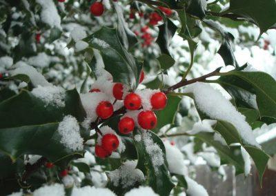 Winter in je leven…. (column)
